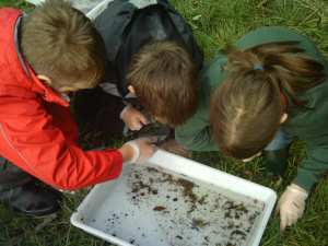 Children sampling invertebrates