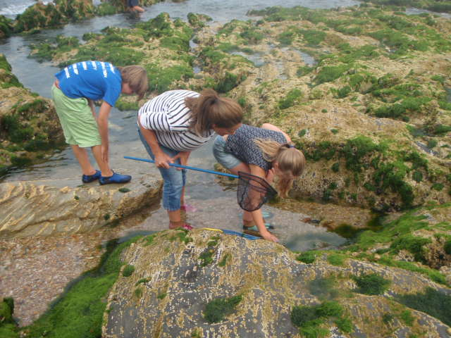 Children looking at rockpools