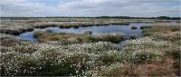 Thorne and Hafield Moors in Summer