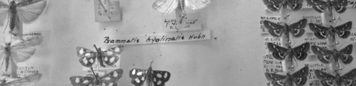 Part of the micromoth collection at Liverpool Museum.  C Bell